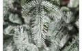 Фото:  Елка Нормандия Пушистая full РЕ 185 см заснеженная Triumph Tree-2