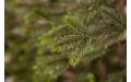 Фото:  Елка Прованс 120 см зеленая Black Box-2