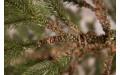 Фото:  Елка Прованс 120 см зеленая Black Box-3