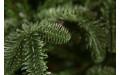 Фото:  Елка Нормандия стройная 155 см темно-зеленая Triumph Tree-4