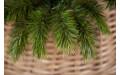 Фото:  Елка Триумф Норд 185 см зеленая Triumph Tree-3
