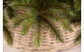 Фото:  Елка Лесная Красавица стройная 120 см зеленая Triumph Tree-4
