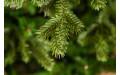 Фото:  Елка Царская 155 см зеленая Triumph Tree-2