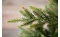 Фото:  Елка Королевская премиум full PE 215 см зеленая Triumph Tree-1