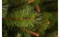Фото:  Сосна Сказочная 215 см светло-зелёная Triumph Tree-2
