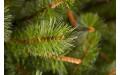 Фото:  Сосна Сказочная 215 см светло-зелёная Triumph Tree-3