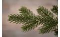 Фото:  Елка Шервуд премиум 230 см зеленая Triumph Tree-1